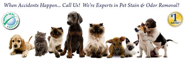 Pet Odour Removal Services Kitchener-Waterloo