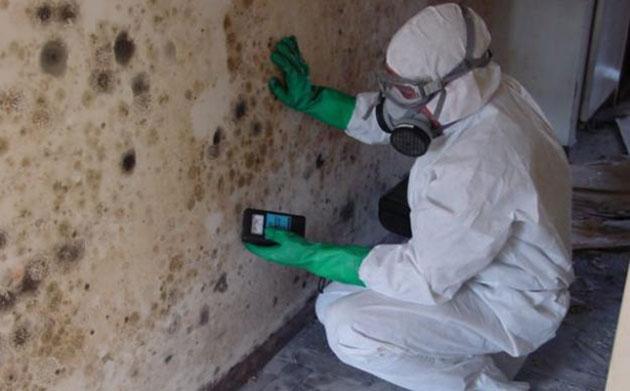 mold in basement Kitchener-Waterloo
