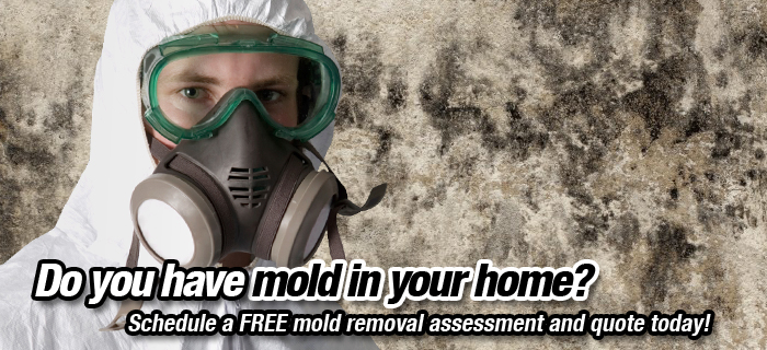 Mould inspection services, Kitchener-Waterloo