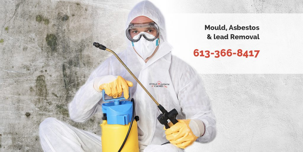 mold removal services, Kitchener-Waterloo